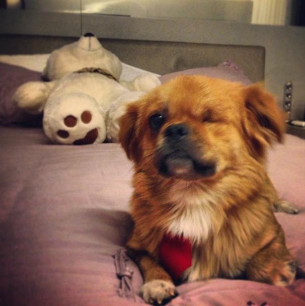 César Menotti adotou o cachorro Fusca. (Foto: Reprodução / Instagram)