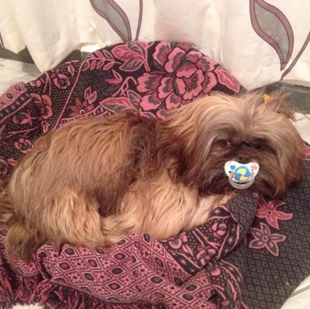 O cachorro Paçoca adora chupeta. (Foto: Reprodução / Instagram)