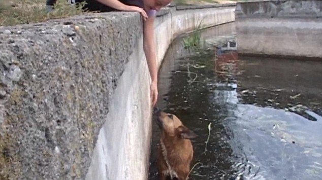 Os cachorros não conseguiam sair do lago sozinhos por causa do muro. (Foto: Reprodução / Daily Mail)