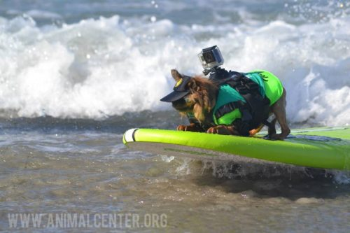 cachorros-competicao-surfe-01