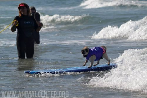 cachorros-competicao-surfe-02