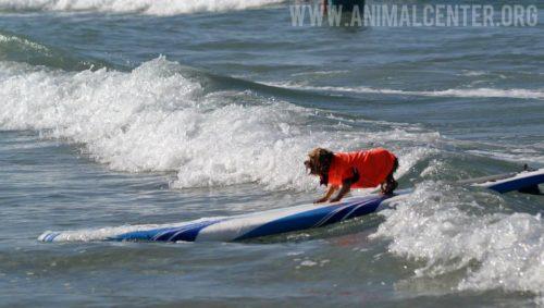 cachorros-competicao-surfe-03