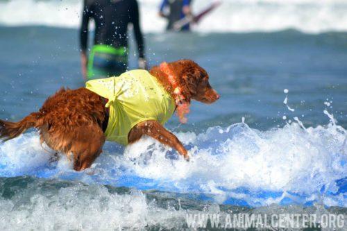 cachorros-competicao-surfe-06