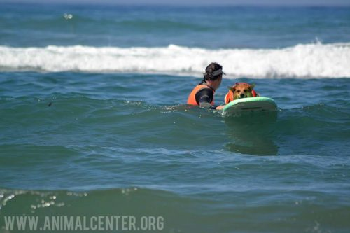 cachorros-competicao-surfe-13