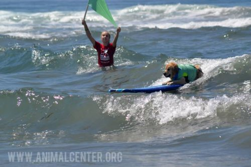 cachorros-competicao-surfe-15