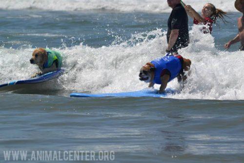 cachorros-competicao-surfe-17