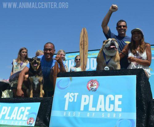 cachorros-competicao-surfe-18