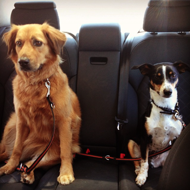 Os cachorros de Hilary Swank no carro. (Foto: Reprodução / Instagram)