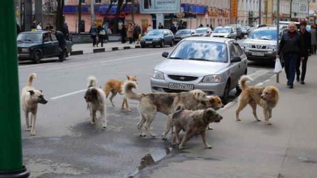 Existem muitos cachorros de rua na cidade de Saravejo. (Foto: Reprodução / BBC UK)