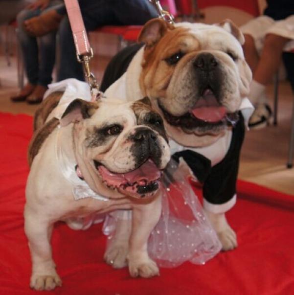 Os cachorros Elvis e Pitty. (Foto: Reprodução / Instagram)