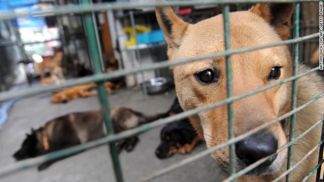 Cachorros em abrigo em Hong Kong. (Foto: Reprodução / CNN)
