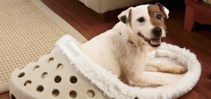 Cama de cachorro criativa. (Foto: Reprodução / Dogster)