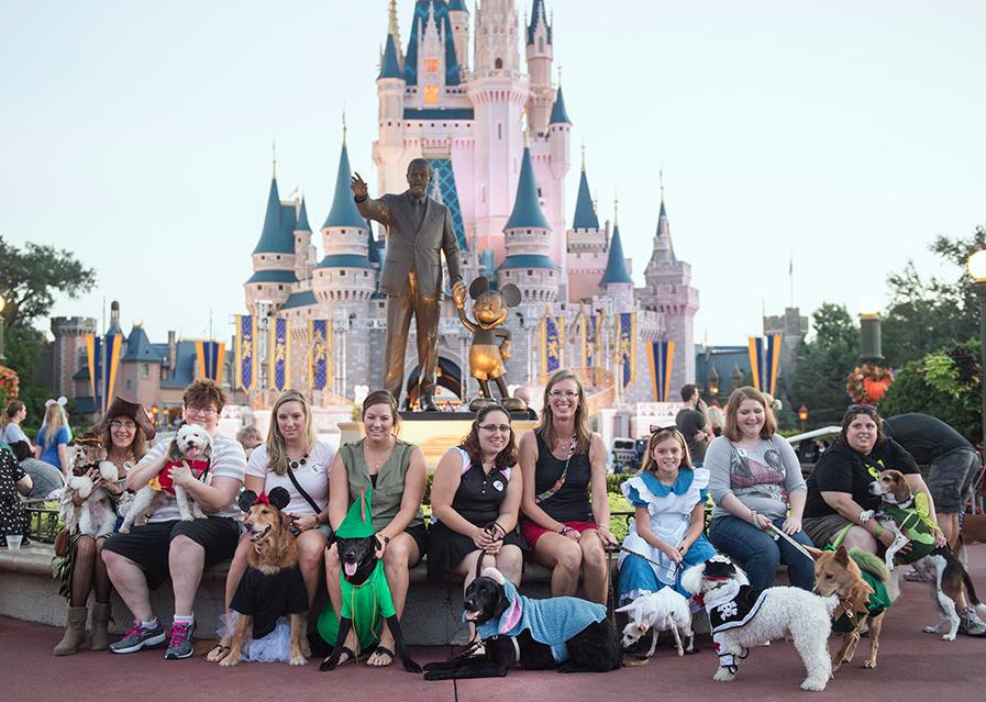 Cachorros fantasiados participaram de evento especial em parque da Disney. (Foto: Reprodução / Disney Park Blogs)