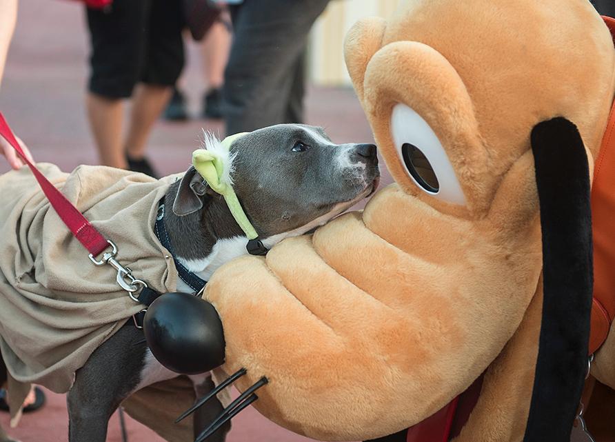 Cachorro conhecendo o Pluto. (Foto: Reprodução / Disney Park Blogs)