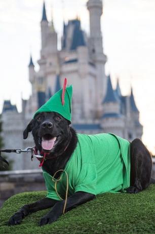 (Foto: Reprodução / Disney Park Blogs)