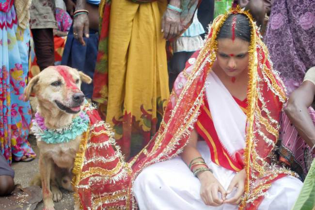 Casamento entra a garota e o cachorro. (Foto: Reprodução / Metro UK)