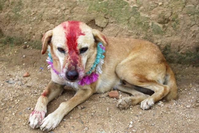 O cachorro recebeu até pinturas no corpo. (Foto: Reprodução / Metro UK)