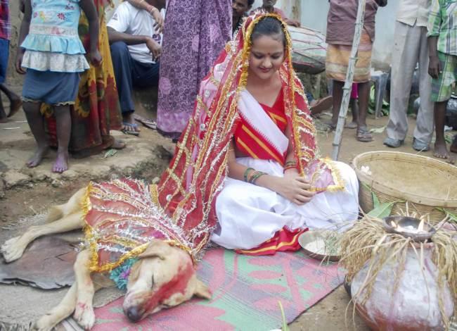 O cachorro cochilando durante a cerimônia. (Foto: Reprodução / Metro UK)