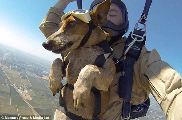 Nathan Batiste levou seu cachorro para saltar de paraquedas. (Foto: Reprodução / Daily Mail)