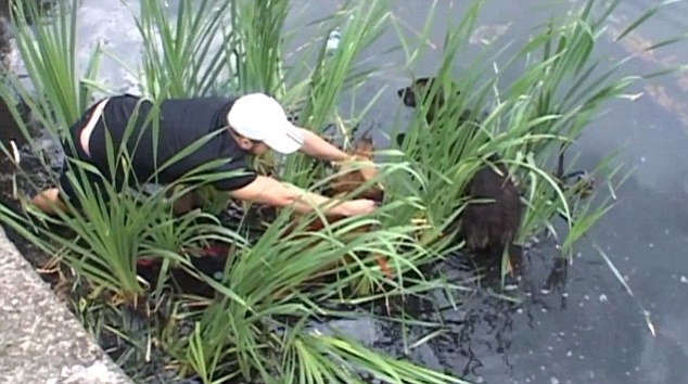 Rapaz tentando se aproximar dos cachorros, durante resgate. (Foto: Reprodução / Daily Mail)