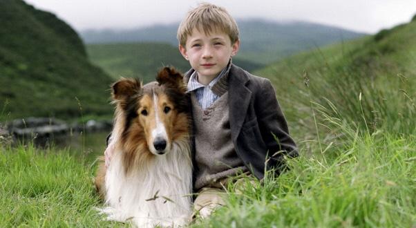 Lassie aumentou a popularidade da raça collie. (Foto: Reprodução / Google)