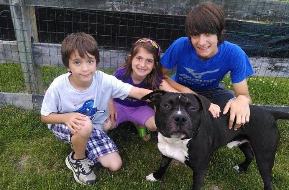O pit bull em seu novo lar com seus irmãos Cody, Tyler e Haley. (Foto: Reprodução / Huffington Post)