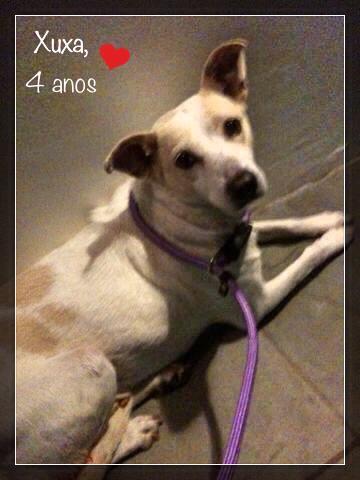 A cachorra Xuxa tem 4 anos, é quietinha e boazinha. (Foto: Reprodução / Facebook / Projeto Vira-Lata Com Raça)