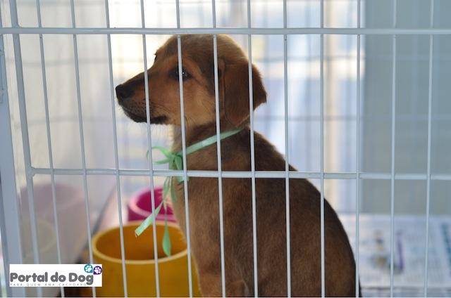 Cachorro esperando para ser adotado.