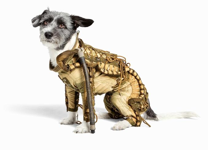 Traje espacial para cães será leiloado. (Foto: Divulgação / Auctionata)