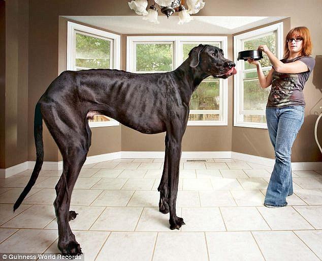 O enorme cão era muito bonzinho. (Foto: Reprodução / Daily Mail)