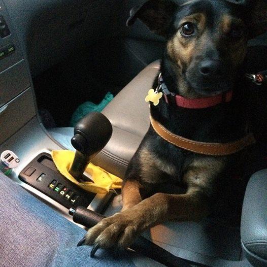 A cachorra Tuca tem 1 ano, é dócil e simpática. Quem não gostaria de leva-la para casa? (Foto: Reprodução / Facebook / Projeto Vira-Latas com Raça)