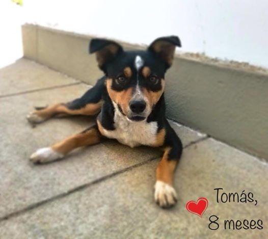 Tomás tem apenas 8 meses de vida e é muito carinhoso. (Foto: Reprodução / Facebook / Projeto Vira-Latas com Raça)