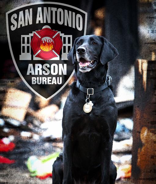 Categoria cão arson. Kai é um labrador retriever de 6 anos, que trabalha no corpo de bombeiros de San Antonio. (Foto: Reprodução / Pawnation)