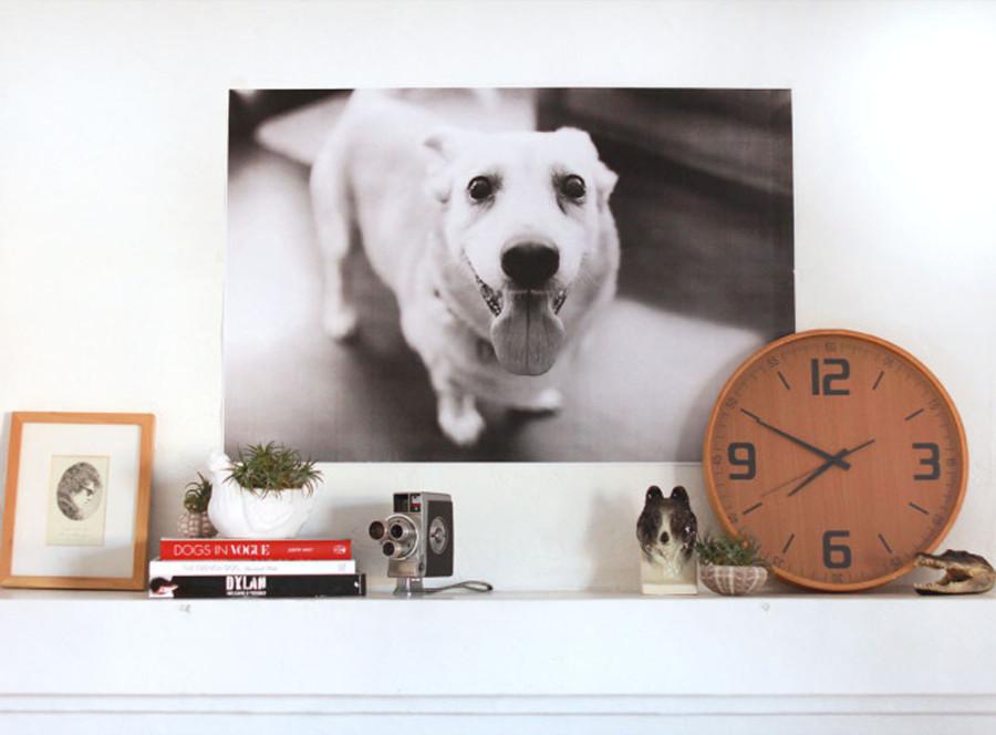 boas-ideias-cachorro-criatividade (10)
