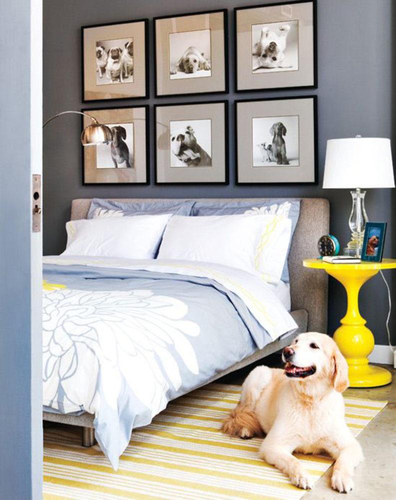 boas-ideias-cachorro-criatividade (7)