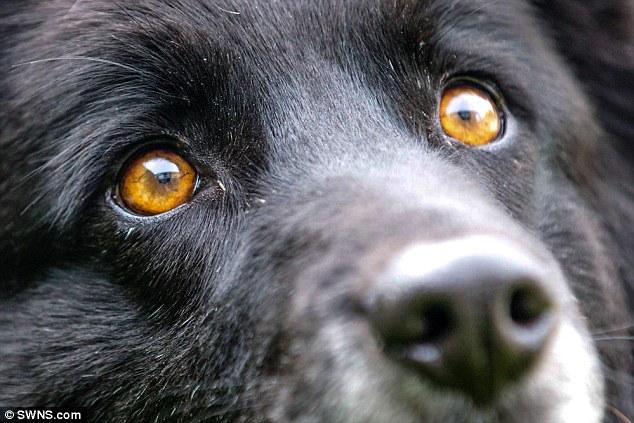 Os olhos laranjas da cachorra são uma raridade. (Foto: Reprodução / Daily Mail UK)
