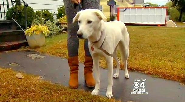 A cachorra Rosie salvou sua tutora. (Foto: Reprodução / Life With Dogs)