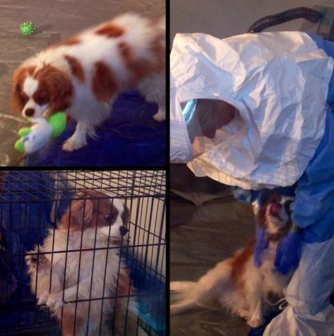 Bentley brincando e recebendo carinho de veterinário. (Foto: Reprodução / Twitter / Sana Syed)