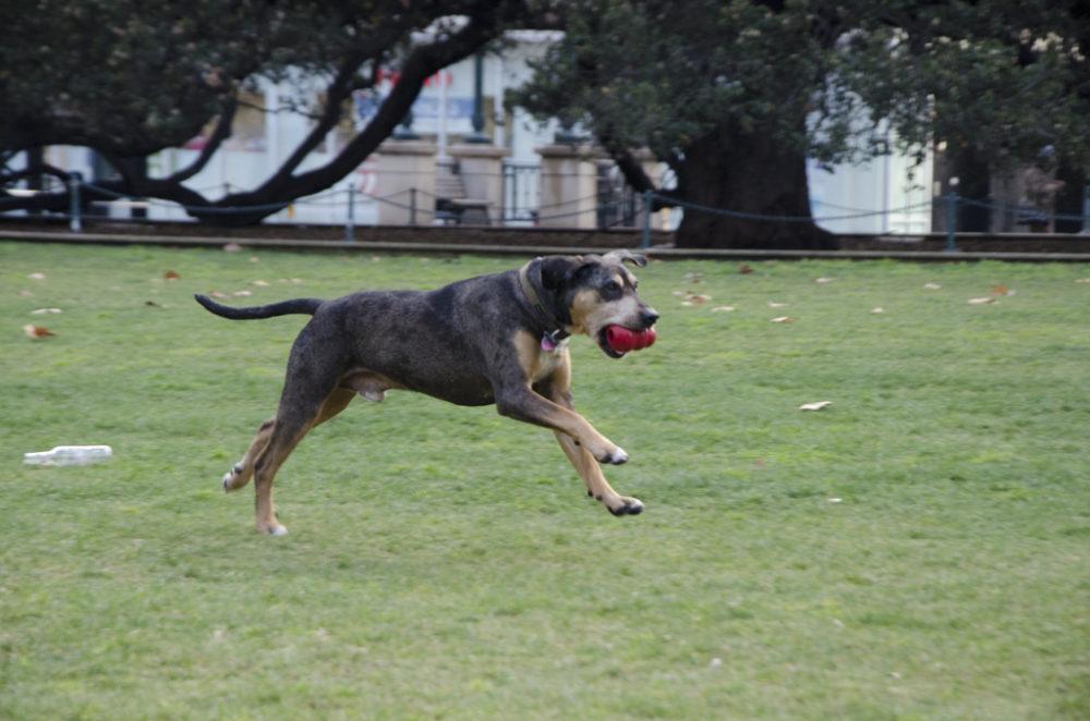 """No site da candidatura do cão, ele """"conta"""" que adora correr. Ativistas do movimento Occupy Oakland. (Foto: Reprodução / Einsten for Oakland)"""