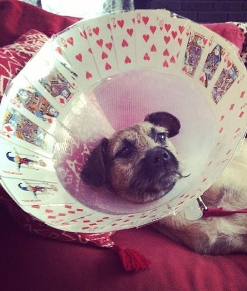 cachorro-cone-criativo-04
