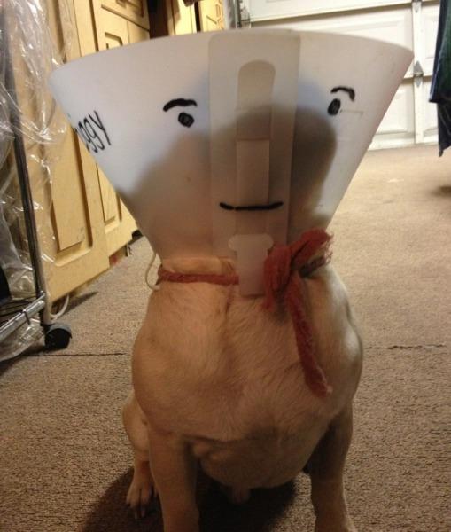 cachorro-cone-criativo-06