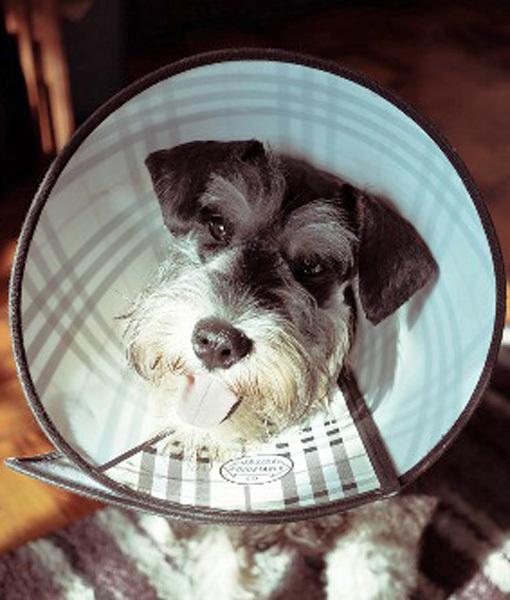 cachorro-cone-criativo-07