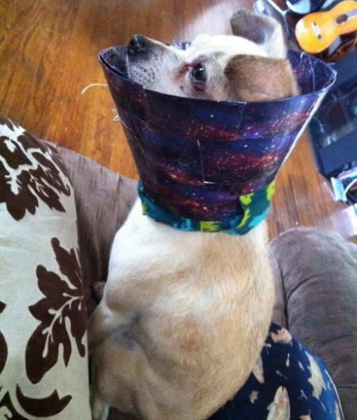 cachorro-cone-criativo-09