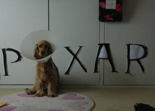 cachorro-cone-criativo-11