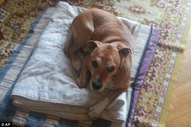 As autoridades afirmam que o cão poderia ter o vírus mesmo sem apresentar os sintomas. (Foto: Reprodução / Daily Mail UK)