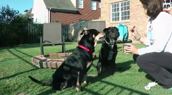 Lazarus e Tucker adoram brincar juntos. (Foto: Reprodução / Dogster)