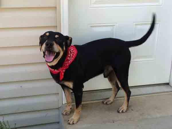 O cachorro Lazarus continuou vivo após receber injeção letal. (Foto: Reprodução / Dogster)