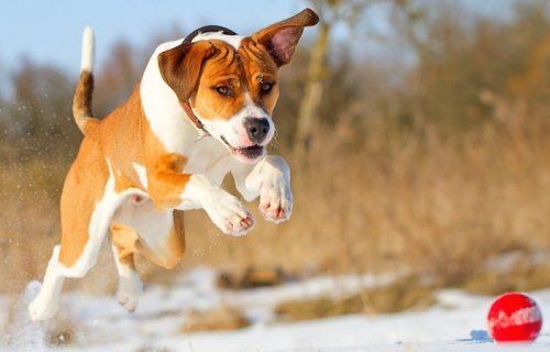 Correr e pular podem trazer problemas físicos aos cachorros. (Foto: Reprodução / Google)