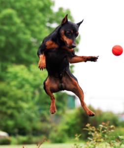 Os cães fazem atividade física sem perceber. (Foto: Reprodução / Google)