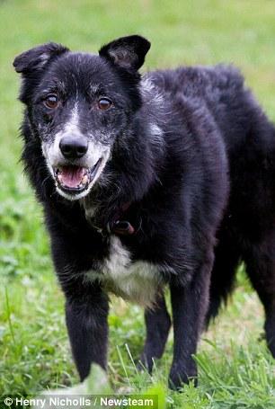 O cachorro Toby espera por um novo lar desde que era filhote. (Foto: Reprodução / Daily Mail UK)